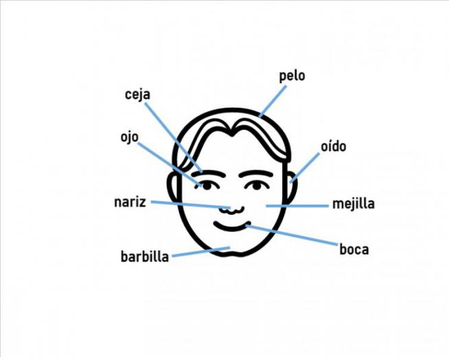 Body parts in Spanish | coLanguage