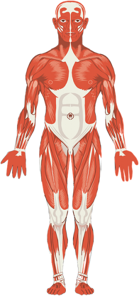 le parti del corpo umano in francese
